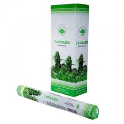 Cannabis 20 Bastoncini...